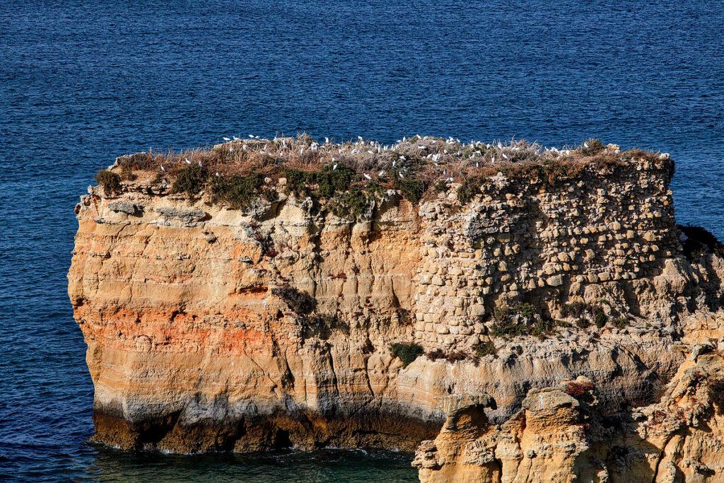 Foto von Moewen auf einem Felsen in Lagos am Algarve in Portugal