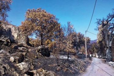 Foto von verbrannter Erde in Monchique (2018)