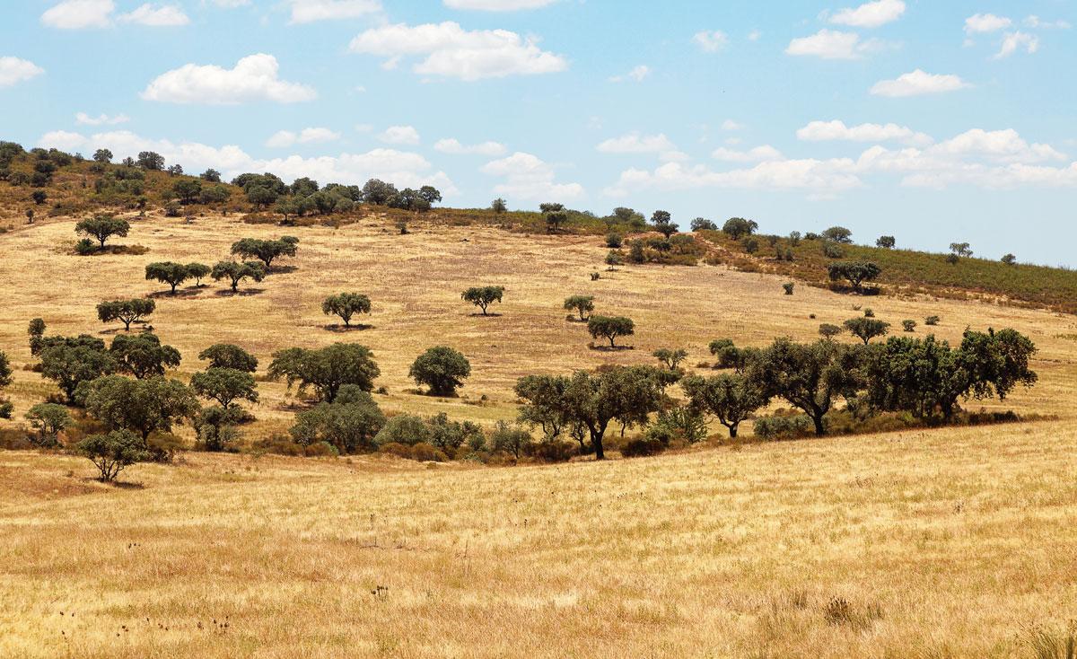 Foto mit typischer Landschaft im Alentejo