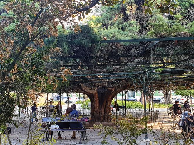 Foto vom Park «Príncipe Real» in Lissabon