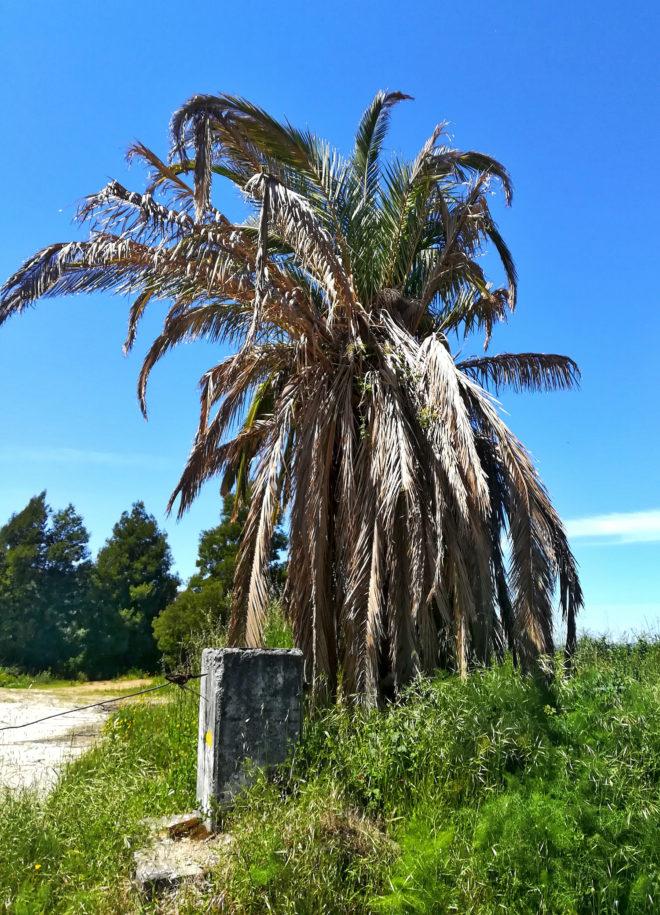 Foto von zerstörten Palmen in Portugal