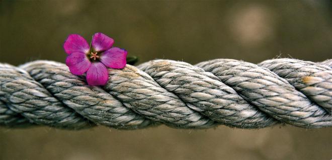 Foto von Ulrike Leone · pixabay.com
